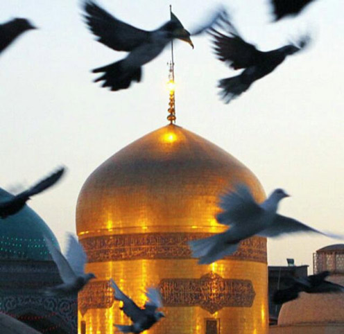امام رضا قربون کبوترات